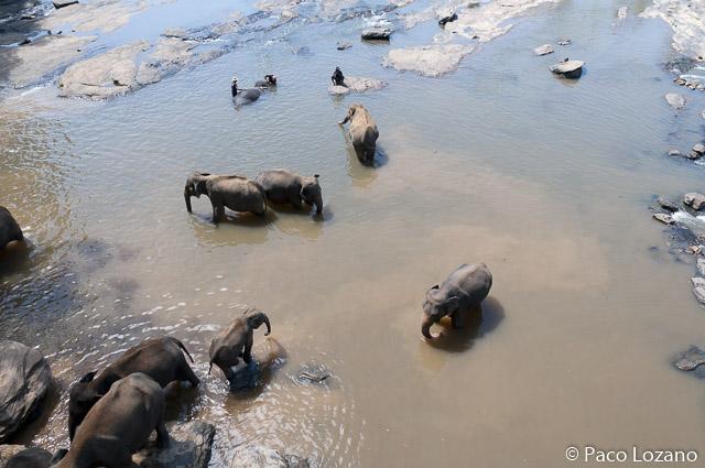 Destino recomendado: el orfanato de elefantes de Pinnawala
