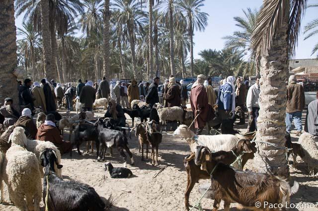Túnez, destino de elección para marzo