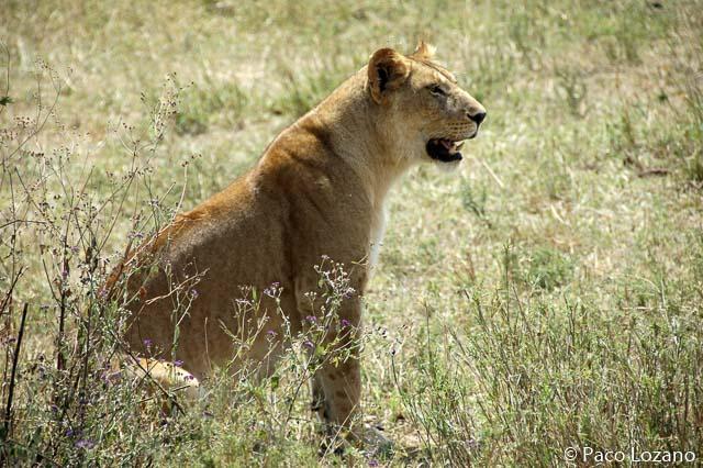 Destinos para enero: Tanzania