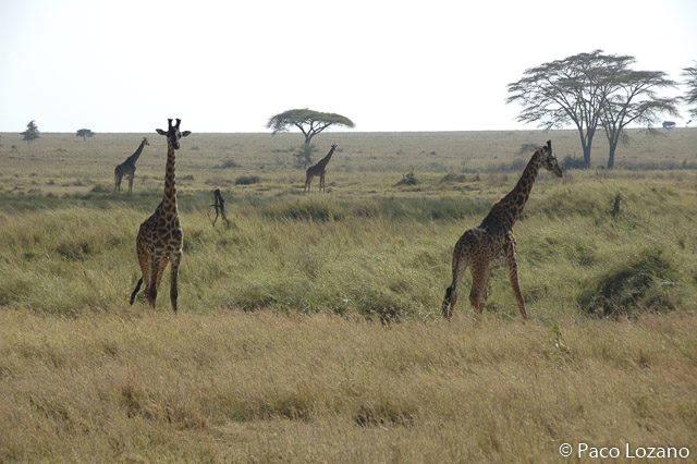 Destino para febrero: Tanzania